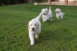 Puppies_5w1