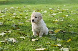 Puppies_5w8